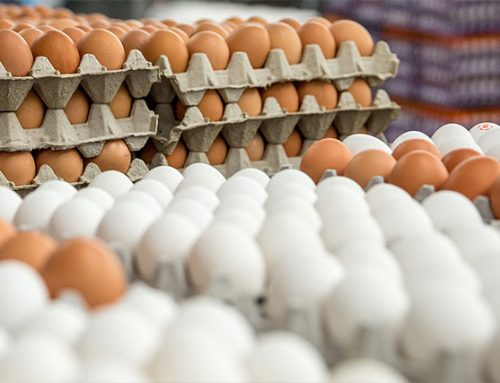 Weaver Eggs scrambles to help Hurricane Irma victims